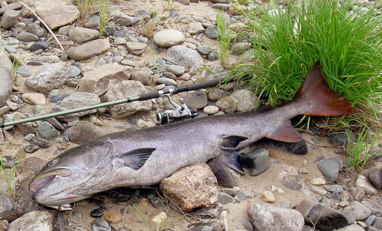рыбалка на байкале какая рыба